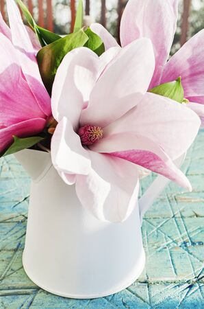 Magnolia spring outdoor pastel background,