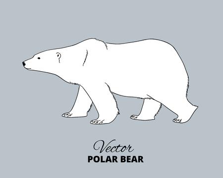 Polar oso de la mano dibuja ilustración. Caminar o varada oso polar, vista lateral. dibujo vectorial.