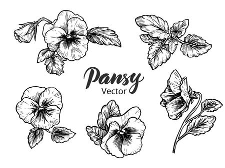 Hand gezeichnet Stiefmütterchen Blumen. Vintage-Stil Vektor-Illustration.