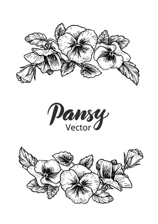 pansy: Frame with hand drawn pansy flowers, vector illustration. Vintage style. Illustration