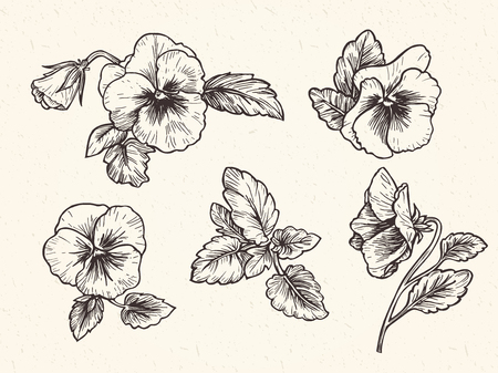 手には、パンジーの花が描かれました。ビンテージ スタイルのベクトル図です。