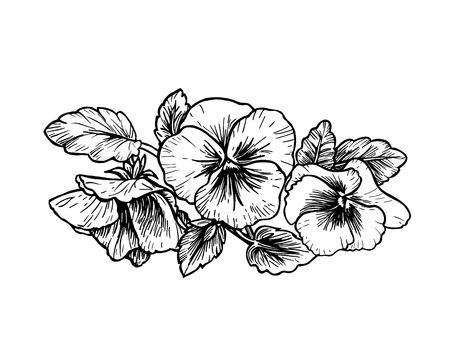 blanco negro: Dibujado a mano las flores del pensamiento. ilustración de estilo vintage.