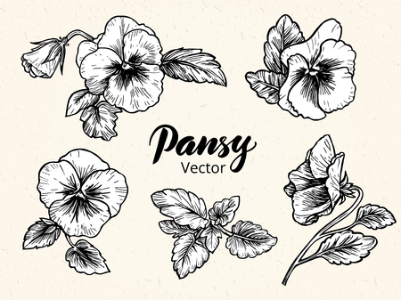 retro flowers: Hand drawn pansy flowers. Vintage style illustration.