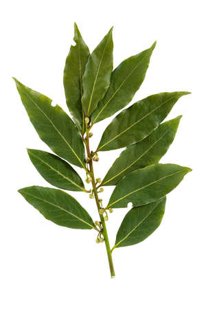 Bay leaf-fragrant culinary seasoning isolated on white background Archivio Fotografico