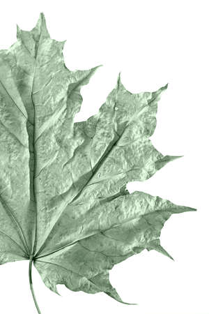 Abstract background from dried up old maple leaves Stock Photo - 1254670