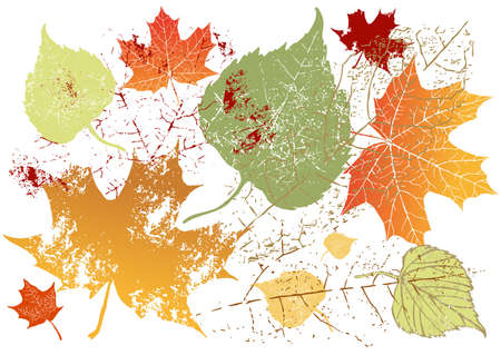 Autumn grunge leaves background-vector sketch of variants with attritions and different color photo