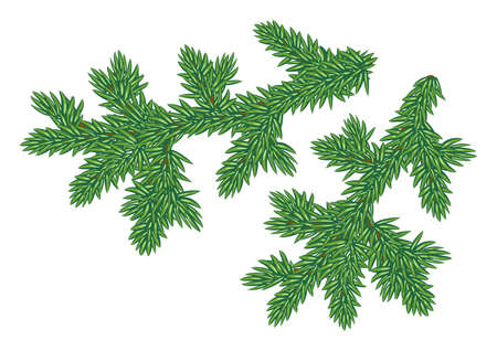 Detailed illustration of young fur-tree branches-elements of christmas design illustration