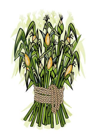 Corn harvest -detailed illustration of ripe stems for designs Stock Illustration - 1923092
