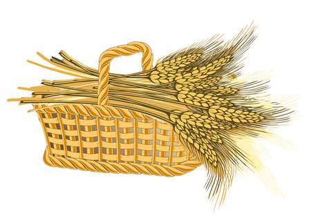 Wheat harvest in basket-detailed illustration of ripe ears for designs illustration
