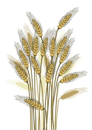 Wheat harvest-detailed illustration of ripe ears for designs illustration