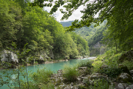Mountain river Tara, Montenegro, natural landscape