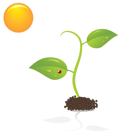 Cute young plant and sun