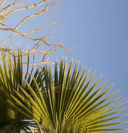 Leaves on palm tree on twilight