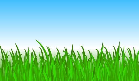 Bright green grass with sky