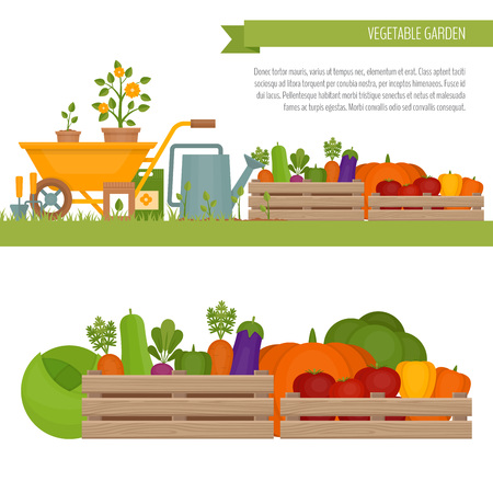 wood crate: Vegetable garden. Organic and healthy food.  Fresh vegetables in a box. Banner with vegetable. Flat style, vector illustration.