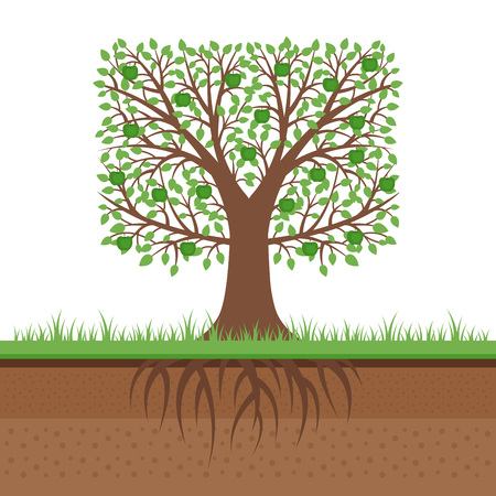 Apple tree with green apples and roots. Soil cut. Gardening concept. Flat design, vector illustration.