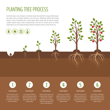 Planting tree process infographic. Apple tree growth stages. Steps of plant growth. Business concept. Flat design, vector illustration. Vettoriali