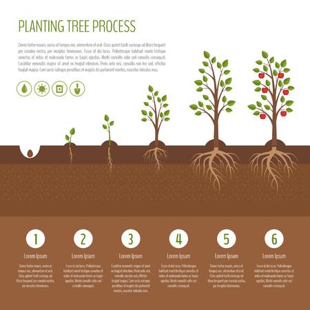 Siembra árbol proceso infográfico. Etapas de crecimiento del manzano. Pasos de crecimiento de las plantas. Concepto de negocio. Diseño plano, ilustración vectorial. Ilustración de vector