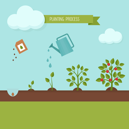 Planting process infographic. Growth stages. Steps of plant growth. Flat design, vector illustration. Stock Illustratie