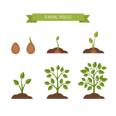 Phases plant growth. Sprout in the ground. Flat style, vector illustration. Vettoriali
