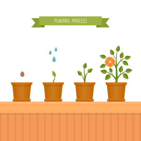 House plant. Phases plant growth. Flat style, vector illustration. Illustration