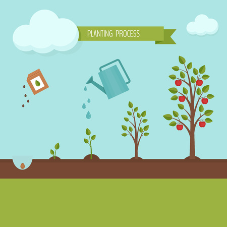 Planting tree process infographic. Apple tree growth stages. Steps of plant growth. Flat design, vector illustration. Vettoriali