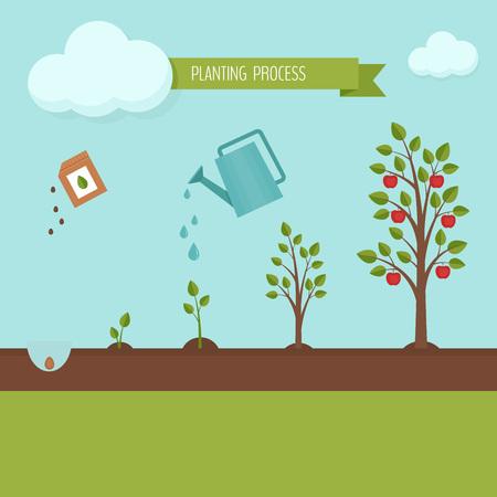 Siembra árbol proceso infográfico. Etapas de crecimiento del manzano. Pasos de crecimiento de las plantas. Diseño plano, ilustración vectorial. Ilustración de vector