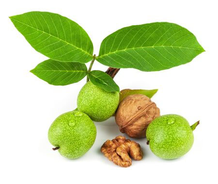 The fruit of green and mature walnut isolated on white background Stock Photo