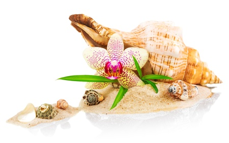 Spa concept with seashell and orchid isolated on white background