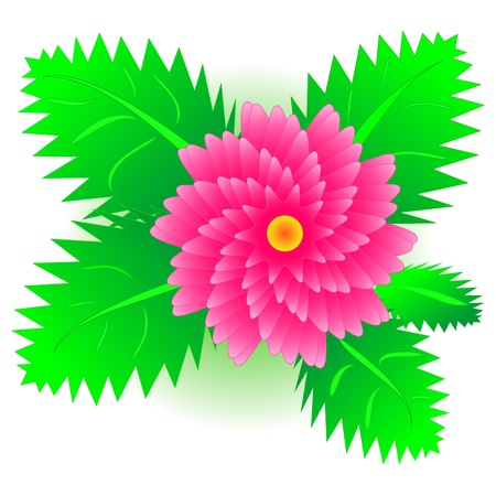 Red flower with green leaves Stock Vector - 18082842