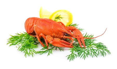 red cooked: Red cooked lobster with dill and lemon isolated on white background