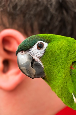 reiterate: Macro view of parrot and the human ear