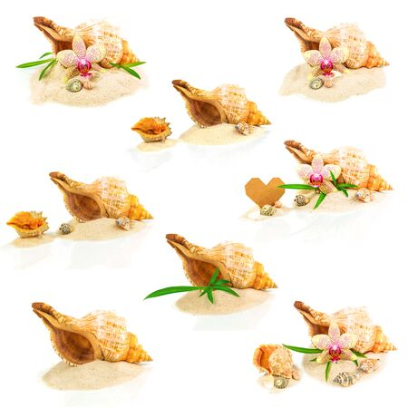 Collage from seashells, bamboo and orchid isolated on white background photo