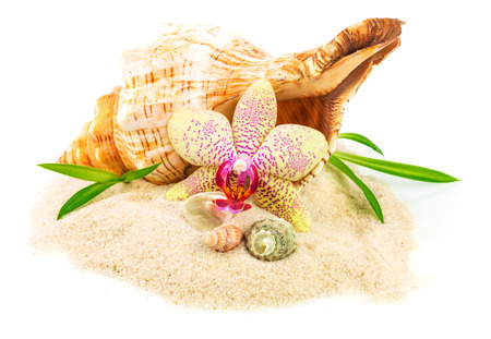 Shells on sand with flower and bamboo isolated on white background