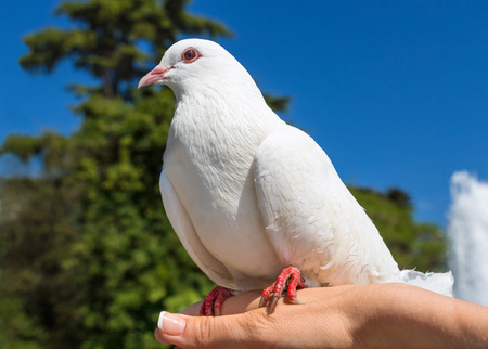 Pigeon sitting on a palm against the sky