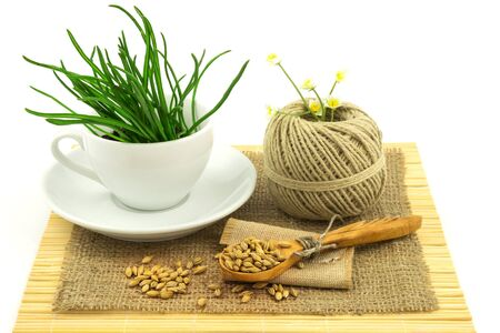 bagging: Composition from grass in the cup and plate, seeds, mat, sacking, spoon, thread isolated on white background