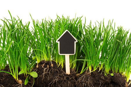 for text: Gardening concept: grass, soil, board for text isolated on white background Stock Photo
