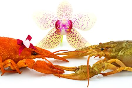 Couple of crayfishes with orchid isolated on white background