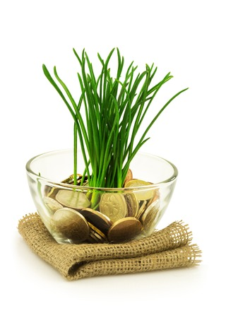 Business, ecology concept with money and grass isolated on white background Stock Photo