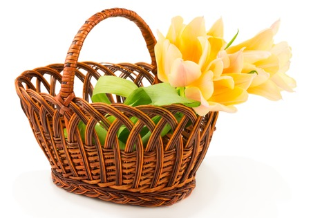 Tulips in basket isolated on white background Stock Photo