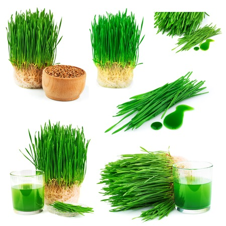 Wheatgrass juice with sprouted wheat and wheat seeds isolated on white background, set Stock Photo