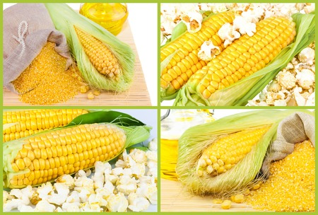 maize flour: Composition from corn, oil and maize flour in flax sack on the mat isolated on white background, collage