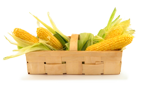 corn flour: Ripe corn with green leaves in the wooden box isolated on white background
