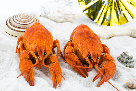 scorching: Macro view of two red lobsters laying on a sandy beach with seashells