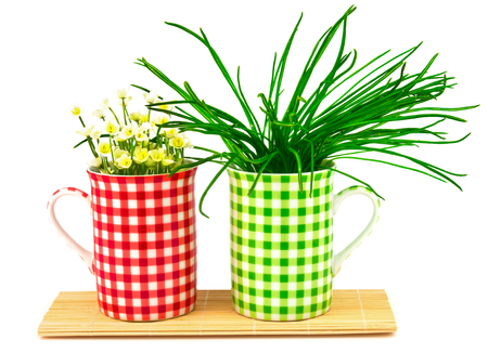 Green and red cups with spring flowers and grass with ribbon on the mat Stock Photo