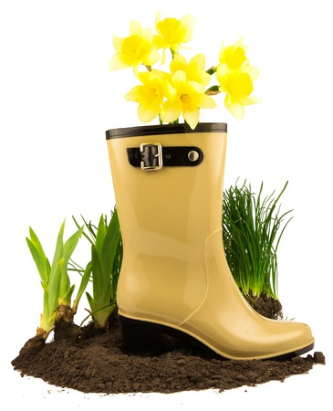 clasp feet: Rubber boots with spring yellow flowers daffodils, grass and ground isolated on white background
