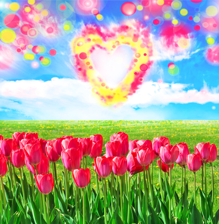 Fresh magenta tulips in the field with magic color clouds Stock Photo