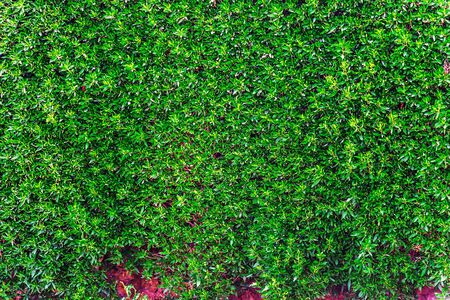 Abstract pattern nature foliage background with fresh green leaves Reklamní fotografie