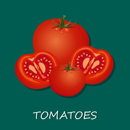 Vector illustrations of fresh tomatoes, isolated on white background Çizim