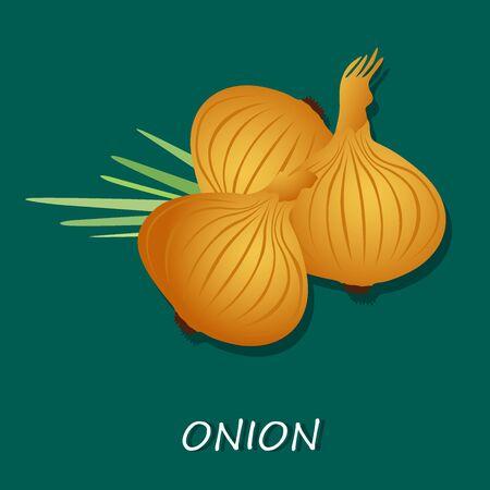Onion, vector